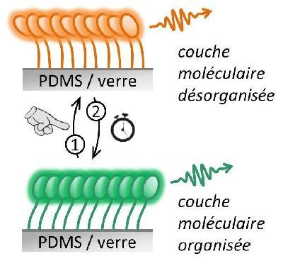 Schéma de principe d'une couche moléculaire mécanofluorochrome : l'organisation supramoléculaire contrôle l'émission de fluorescence